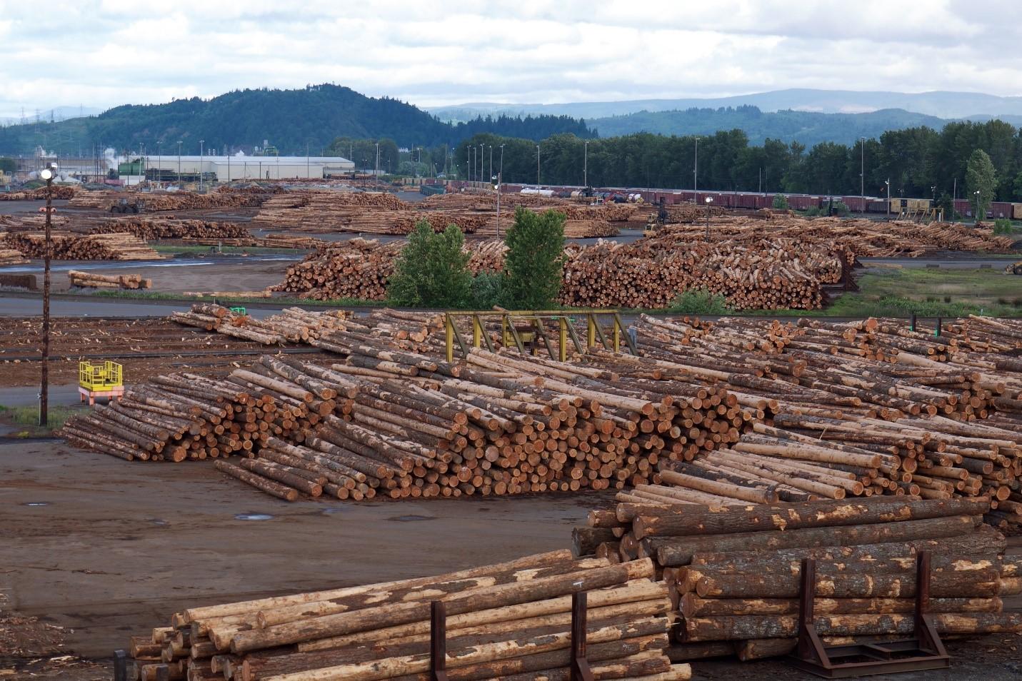 Faut-il limiter les exportations de bois français ?